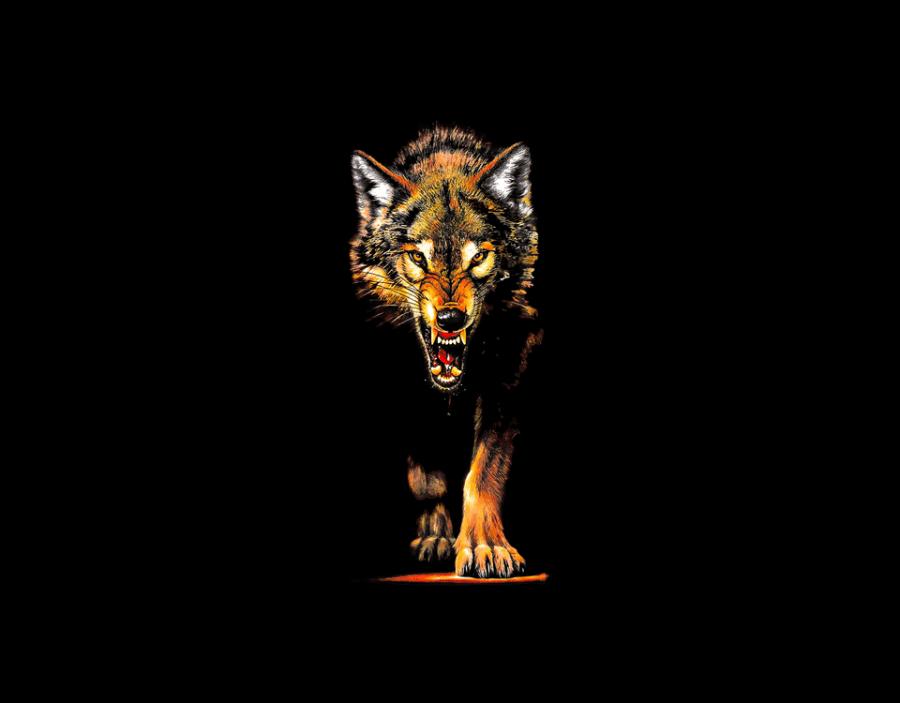 wolf_transfer