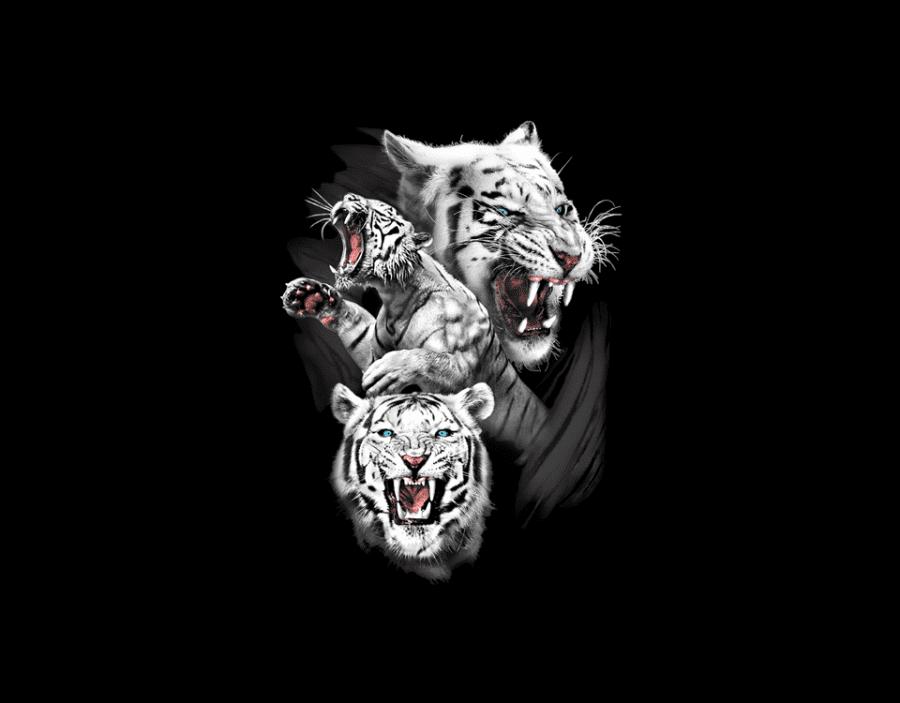 white_tiger_heattransfer