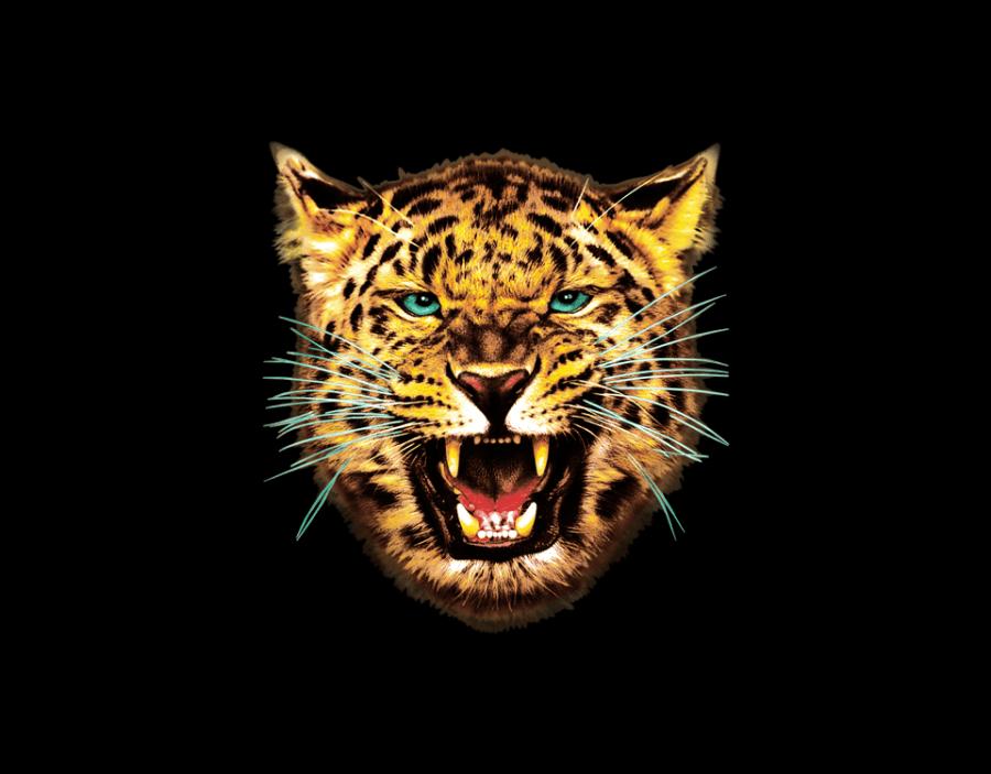 tiger_transfer