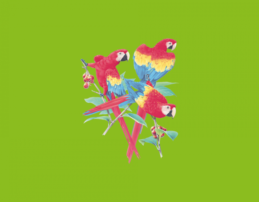 parrot_heat_transfer
